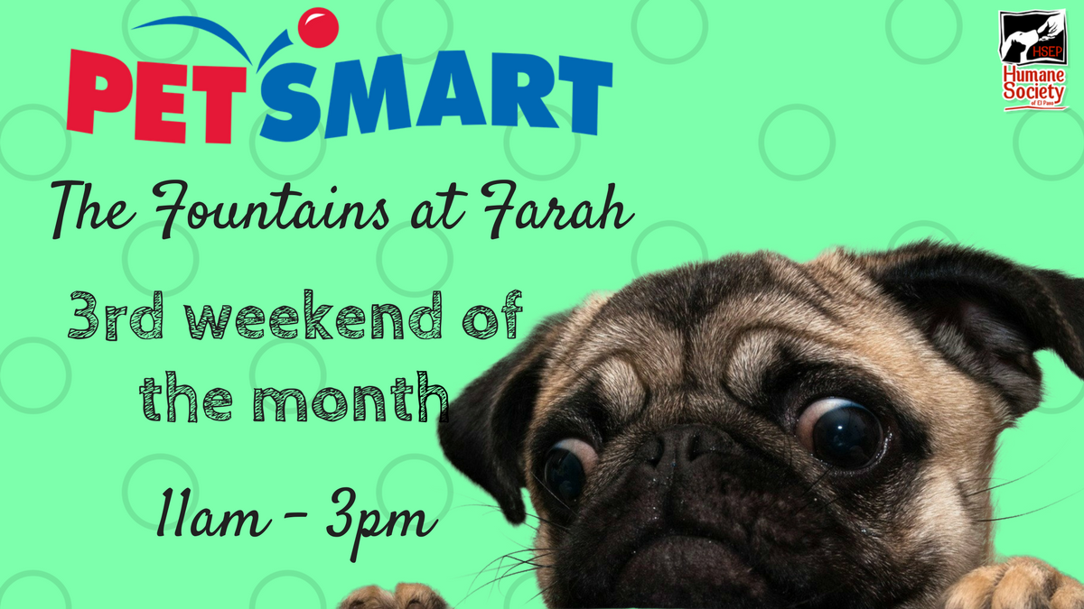 Petsmart Fountains Adoption Weekend Humane Society Of El Paso