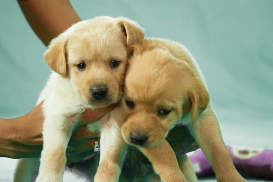 Weaned Puppies Humane Society Of El Paso